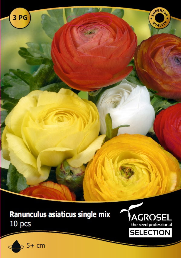 Bulbi Ranunculus, mix