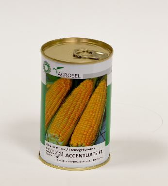 Sweet corn ACCENTUATE F1